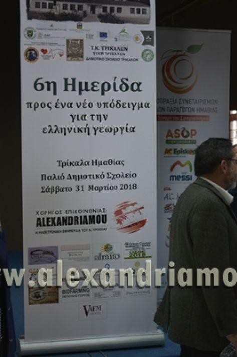 6himerida_georgias_trikala2018001