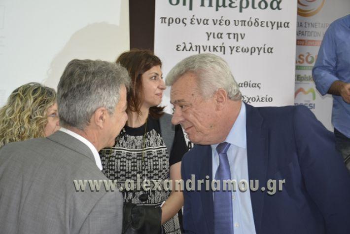 6himerida_georgias_trikala2018024