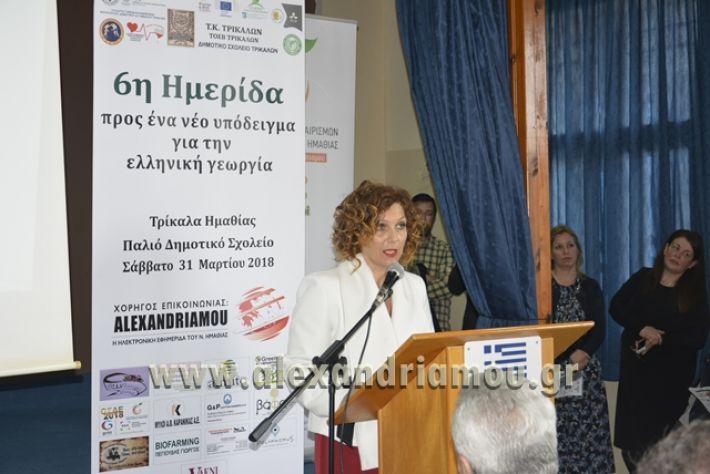 6himerida_georgias_trikala2018026