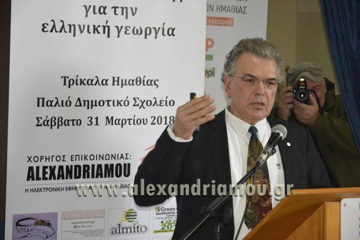 6himerida_georgias_trikala2018039