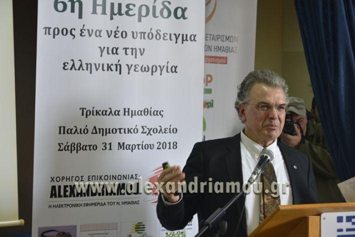 6himerida_georgias_trikala2018040