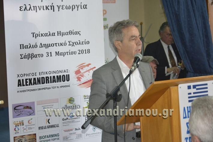6himerida_georgias_trikala2018044