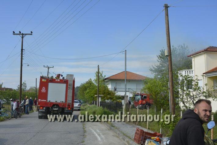 alexandriamou_FOTIA_KYDONIA015