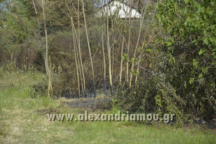 alexandriamou_FOTIA_KYDONIA021
