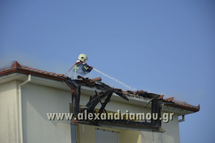 alexandriamou_FOTIA_KYDONIA025