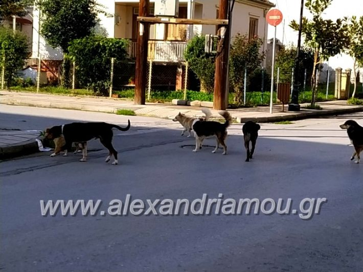 alexandriamou.gr_gadespota201972155936_2450653558556846_3212675003862482944_n
