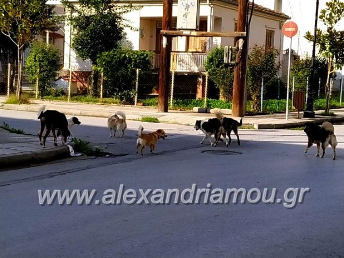 alexandriamou.gr_gadespota201975594486_2910623728948978_8800641886495703040_n