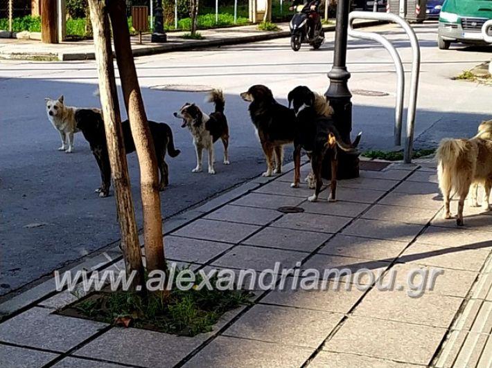 alexandriamou.gr_gadespota201975614017_519599295553886_3064571788328435712_n
