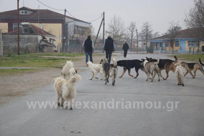 www.alexandriamou.gr_ageli2121DSC_0567