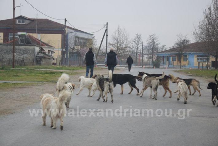 www.alexandriamou.gr_ageli2121DSC_0568