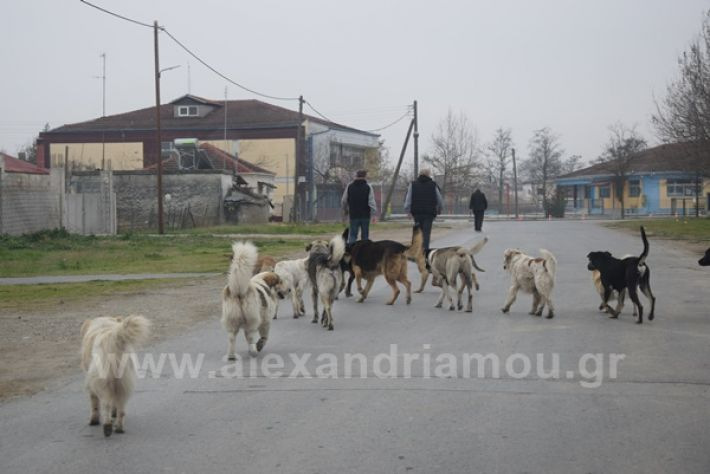www.alexandriamou.gr_ageli2121DSC_0569