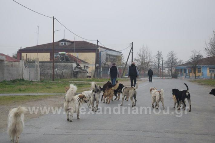 www.alexandriamou.gr_ageli2121DSC_0570