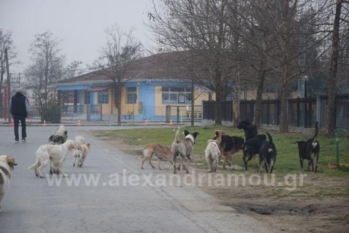 www.alexandriamou.gr_ageli2121DSC_0572