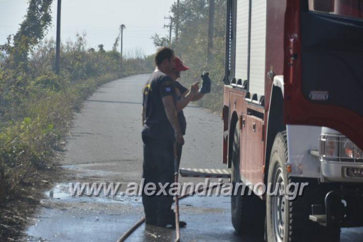 alexandriamou.gr_fortia6.11009