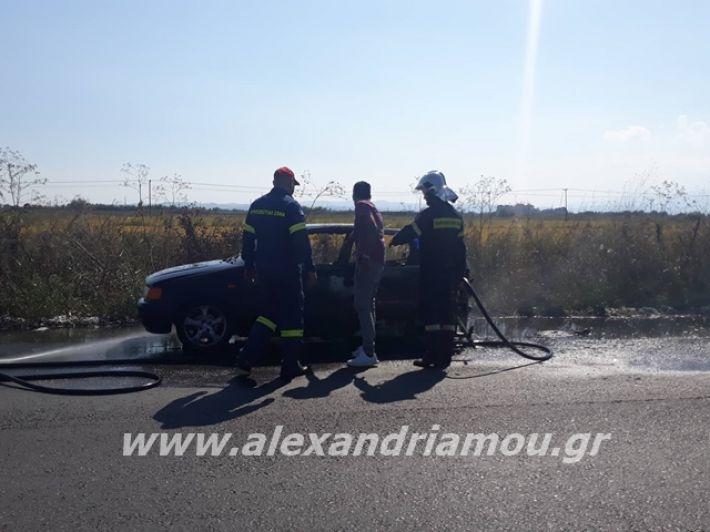 alexandriamou.gr_amaksifotia002