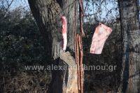 alexandriamou_amarantos08024