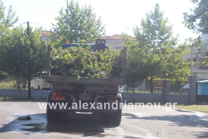 alexandriamou.gr_amfitheatro11.7.19008