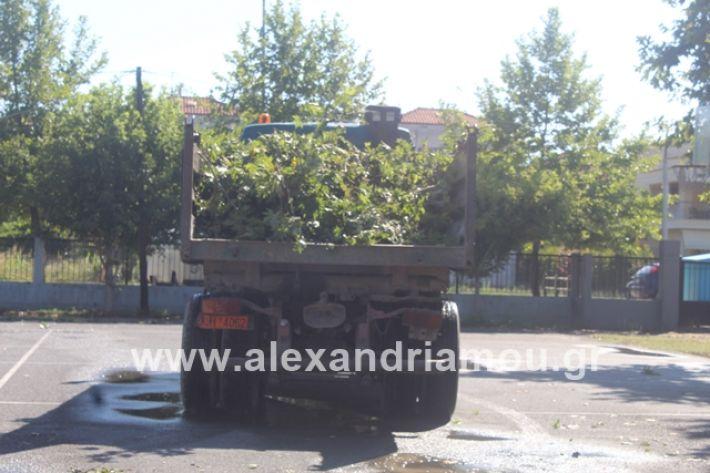 alexandriamou.gr_amfitheatro11.7.19007