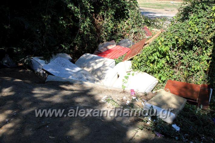 alexandriamou.gr_skoupidiaamfitheatroIMG_9921