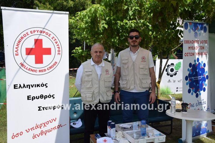 alexandriamou_asterastournoua2019DSC_0287