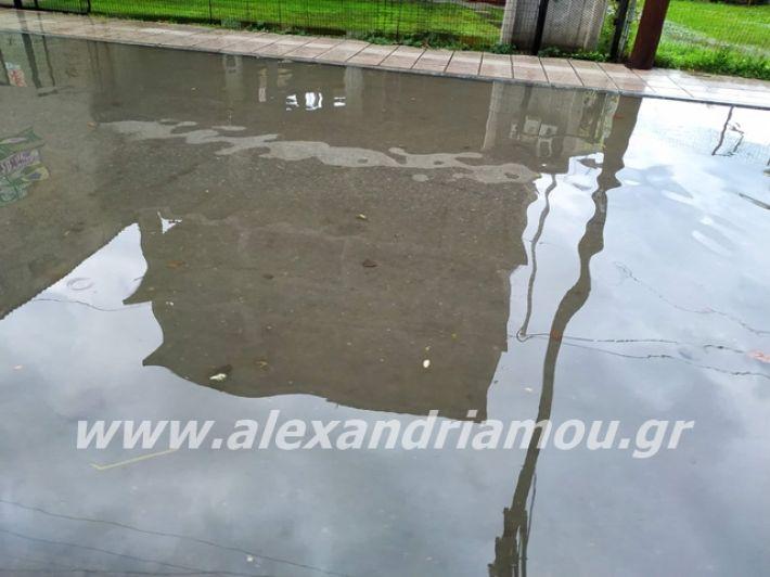 alexandriamou.gr_broxi2019001