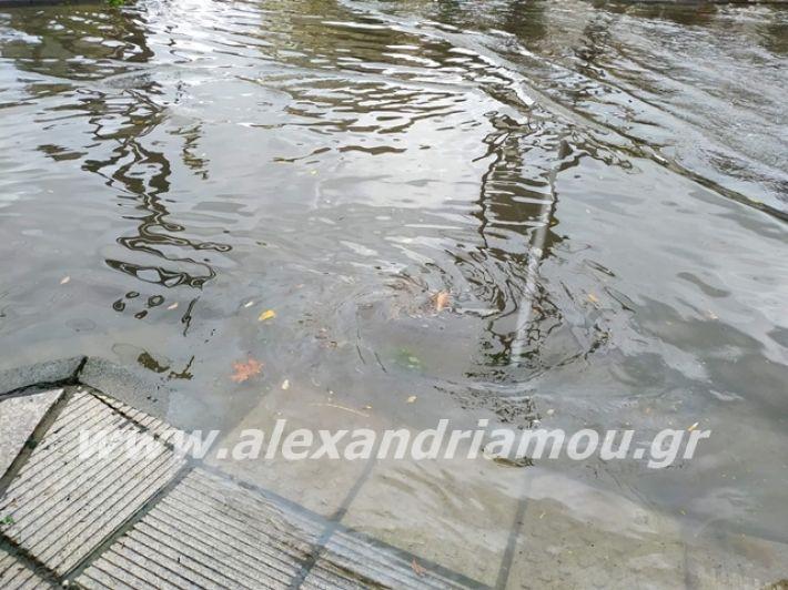 alexandriamou.gr_broxi2019026