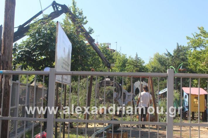 alexandriamou.gr_dentradimarxos2019022
