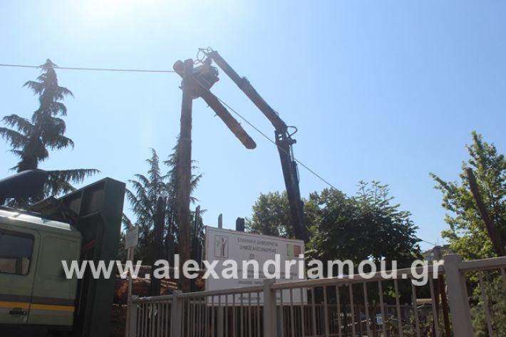 alexandriamou.gr_dentradimarxos2019024