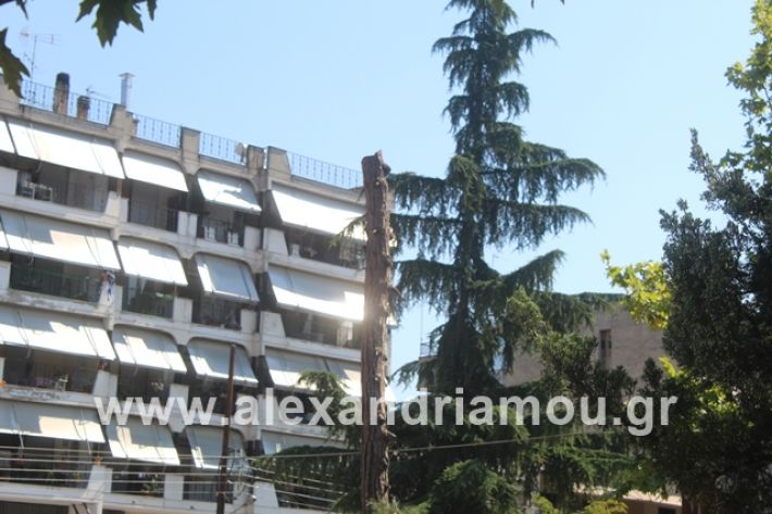 alexandriamou.gr_dentradimarxos2019027