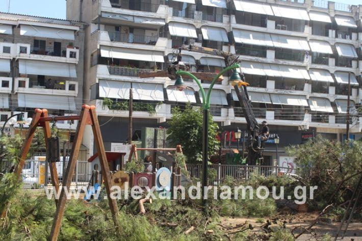 alexandriamou.gr_dentradimarxos2019034
