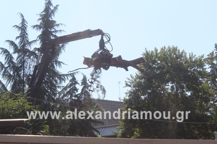 alexandriamou.gr_dentradimarxos2019047