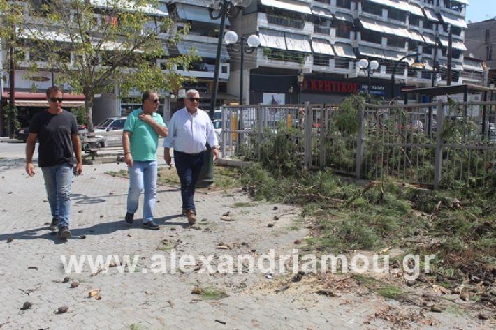 alexandriamou.gr_dentradimarxos2019060