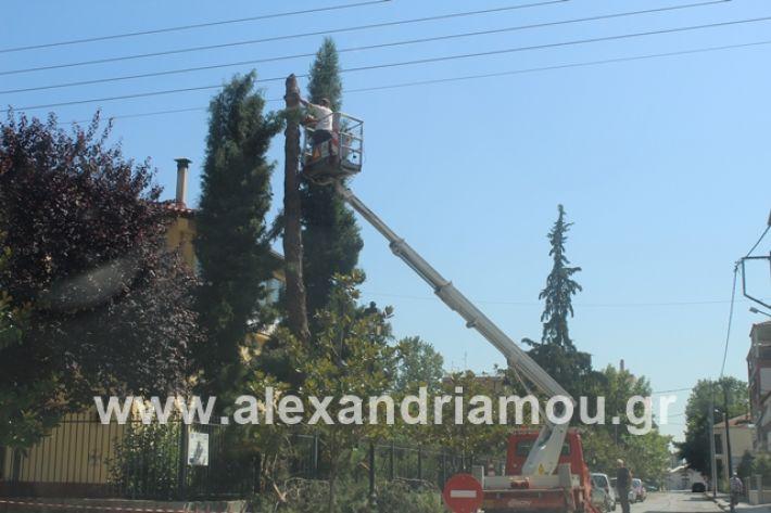 alexandriamou.gr_dentradimarxos2019083