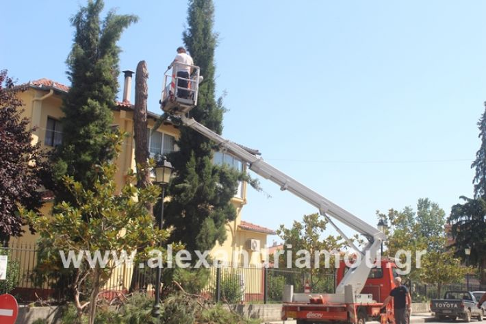 alexandriamou.gr_dentradimarxos2019091