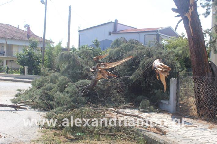 alexandriamou.gr_dentranisisxoleio2019007