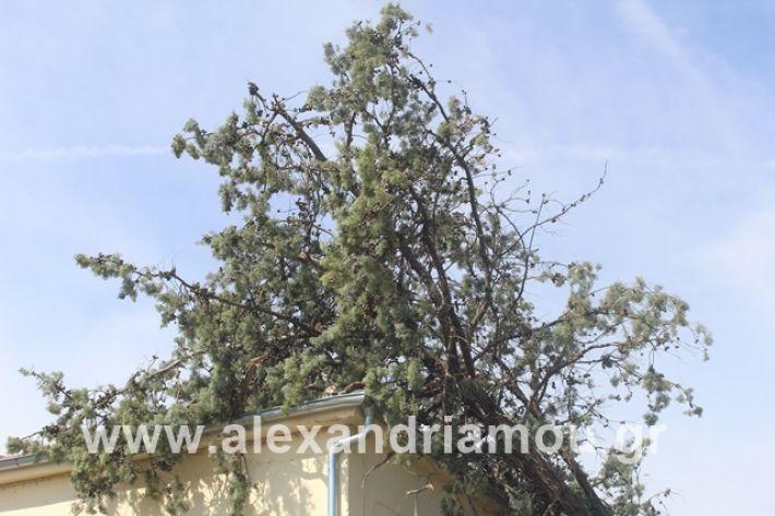 alexandriamou.gr_dentranisisxoleio2019021