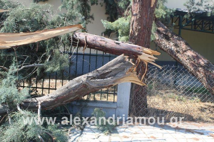 alexandriamou.gr_dentranisisxoleio2019024