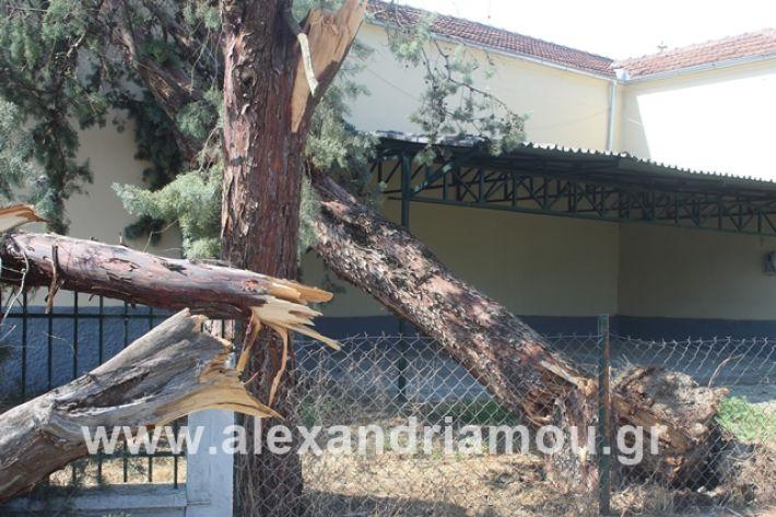 alexandriamou.gr_dentranisisxoleio2019025