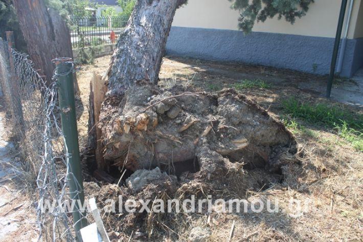 alexandriamou.gr_dentranisisxoleio2019034