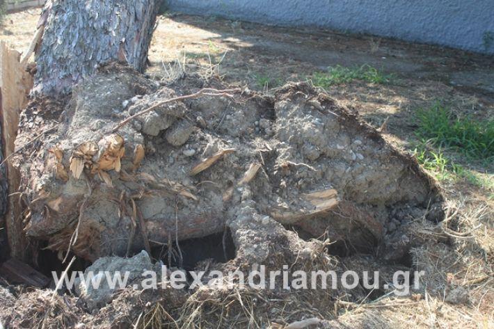 alexandriamou.gr_dentranisisxoleio2019035