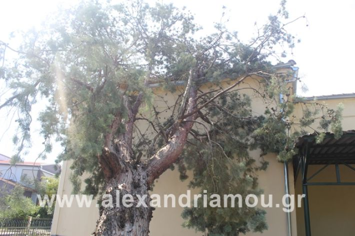 alexandriamou.gr_dentranisisxoleio2019037