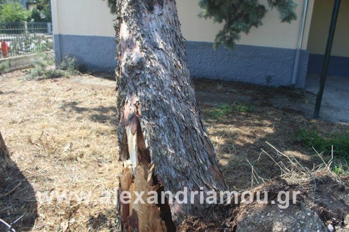 alexandriamou.gr_dentranisisxoleio2019040