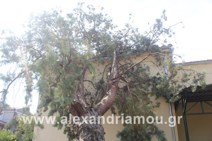 alexandriamou.gr_dentranisisxoleio2019043