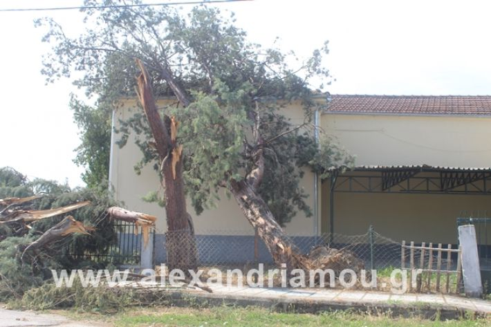 alexandriamou.gr_dentranisisxoleio2019065