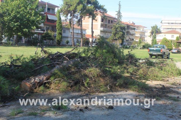 alexandriamou.gr_dentrapanagia15.7.19003