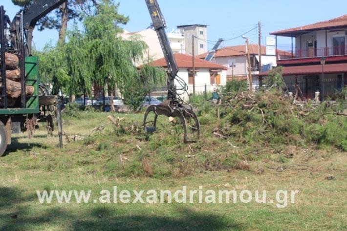 alexandriamou.gr_dentrapanagia15.7.19006