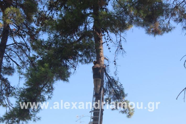 alexandriamou.gr_dentrapanagia15.7.19007
