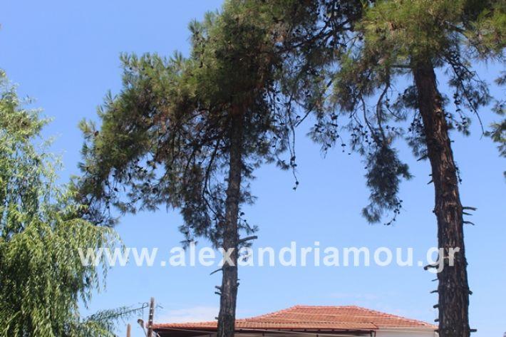 alexandriamou.gr_dentrapanagia2019003