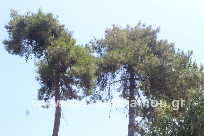 alexandriamou.gr_dentrapanagia2019010