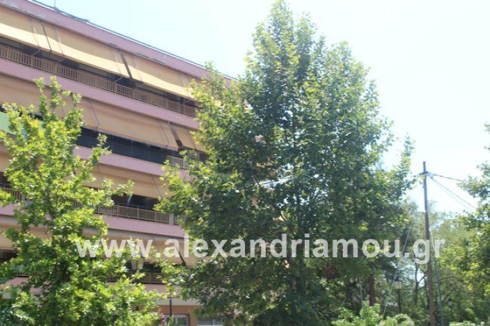 alexandriamou.gr_dentrapanagia2019014